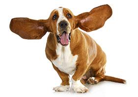 Open ears...take the survey